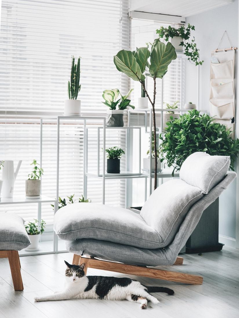 阳台花架在设计时考虑到植物的成长性以及不同种植物对光照的需求,因此设计了一款可以自由组合的花架。