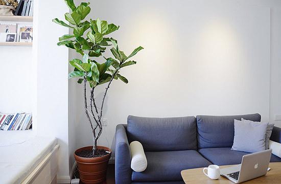 沙发边上摆放体积较大的盆栽,当然也收获到了满满的生气。