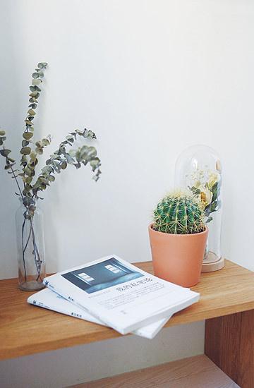 大的、小的,各中品种的盆栽在这个家随处可见,总有一抹绿色能为你传达春天的气息。